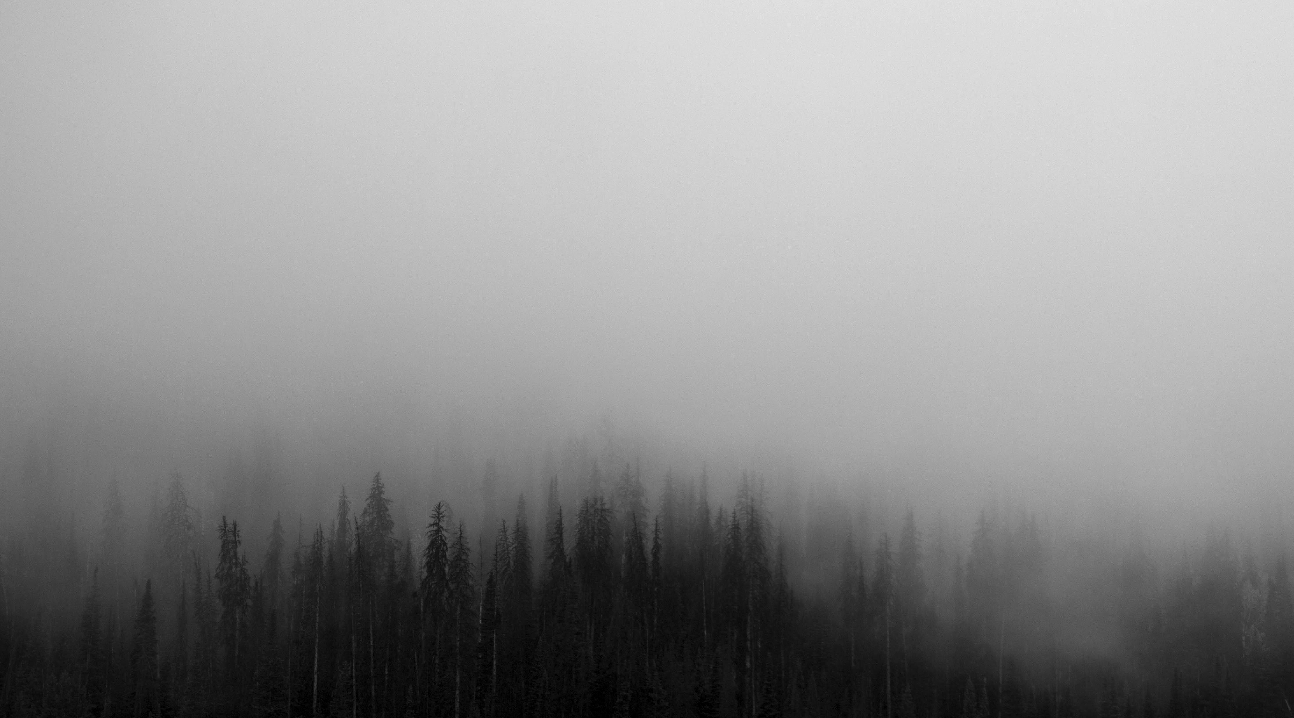 Dark Grey Forest Landscape The Paranormal Scholar